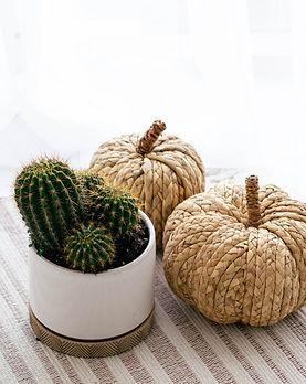 cactus32.jpg
