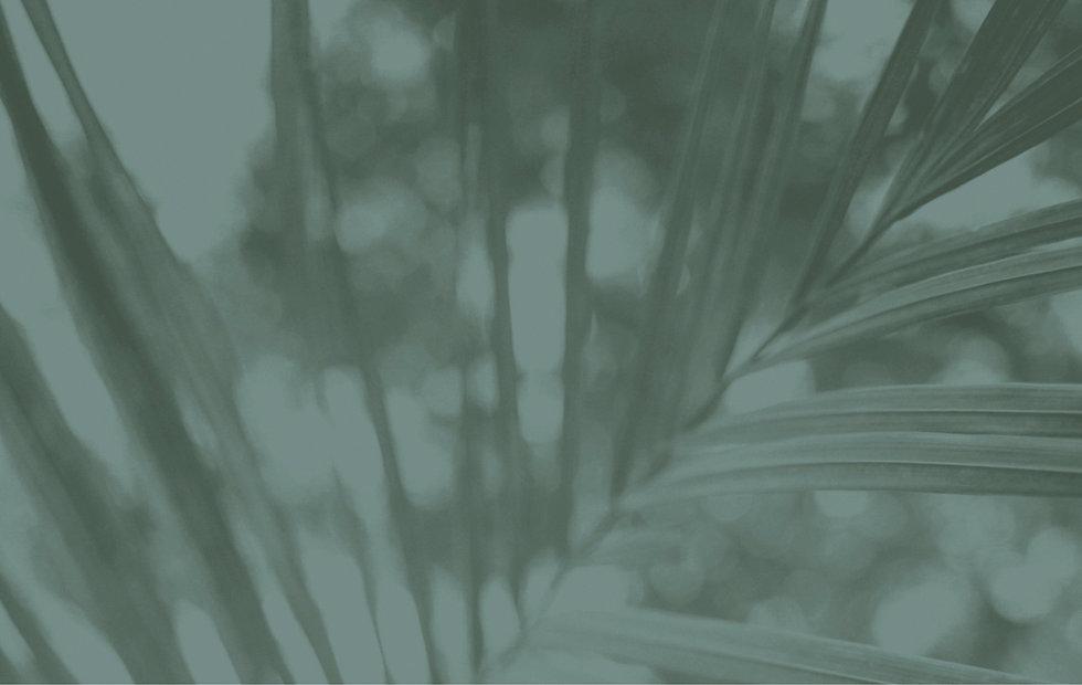 fern_background.jpg