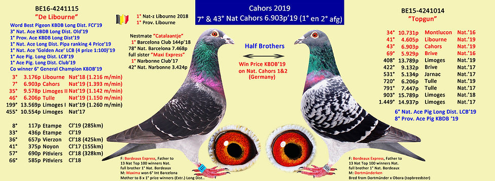 collage Cahors 1&2 2019  libourne & Topg