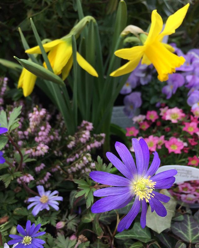 Oh hello! Has spring sprung! _ 🌺🌞looking forward to a balmy 12C tomorrow! #forestschool #urban #fo