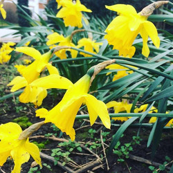 Ooohhhhhh 🌹🌺🌷the first signs of spring_ Is that the sun I see_ 🌞Spaces _foxgloveforestschool _gr