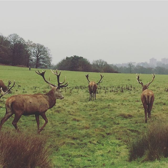 Festive friends in Richmond Park today! #getoutdoors #deer #wildweather #kidsoutside