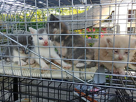 Kittens in trap_2.jpg