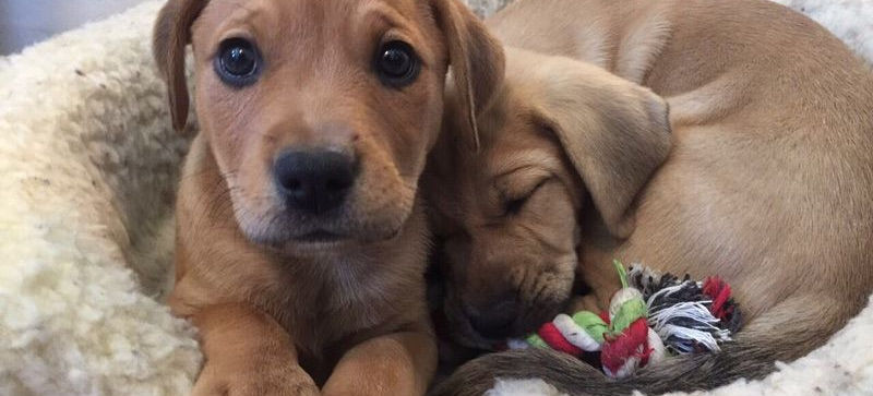 puppies4.jpg
