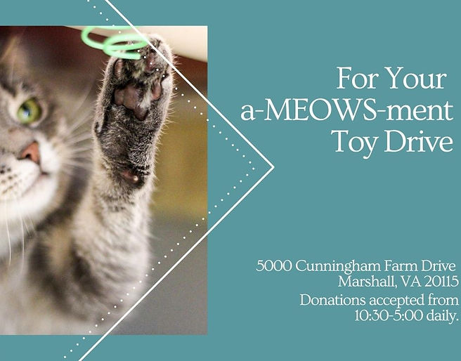Slider For your aMEOWSment toy drive.jpg