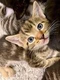 Kitten_Event_2.jpg
