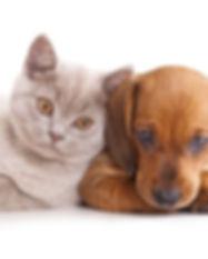 Animals-baby-cat-dog-HD-wallpaper_edited