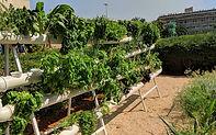 קהילת חקלאי אוניברסיטת תל אביב
