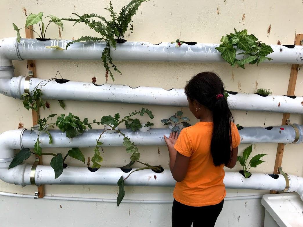 מערכת הידרופונית על קיר