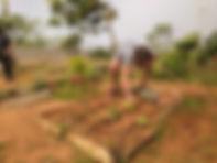 חקלאי תיכונט