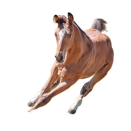 The foal PNG.png