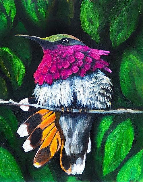 The Wine-Throated Hummingbird