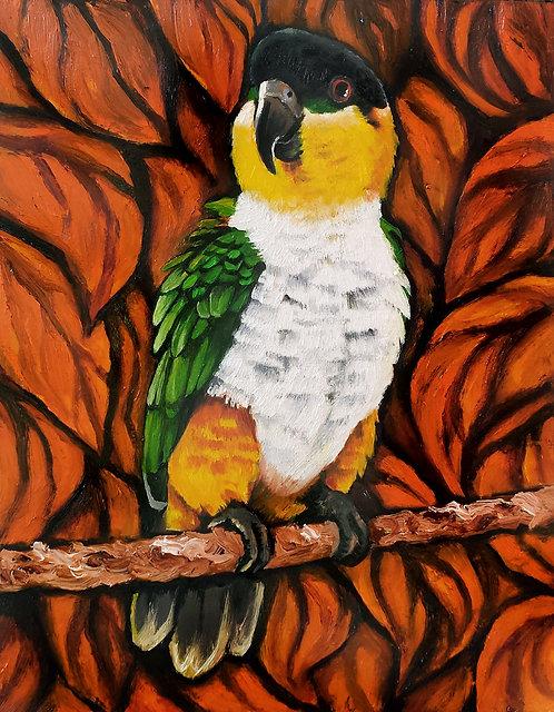 Black Headed Caique parrot - Original Oil Painting