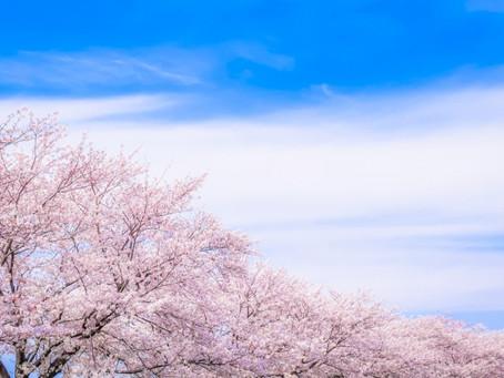 フリー台本『桜』