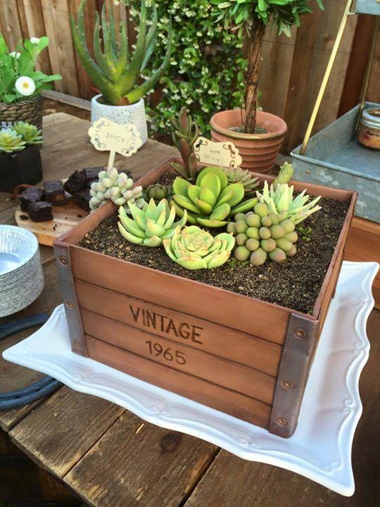 Succulent Planter Cake
