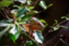 chameleon-1356469_1920.jpg