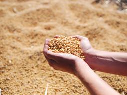 Incentivos e benefícios fiscais Federais para o Agronegócio