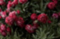 4k-wallpaper-beautiful-bloom-2534523.jpg