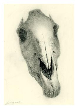 Laura Weinberger_Zebra skull print_5x7.j