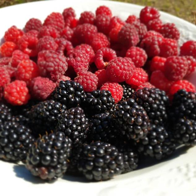 RCG very berry.jpg