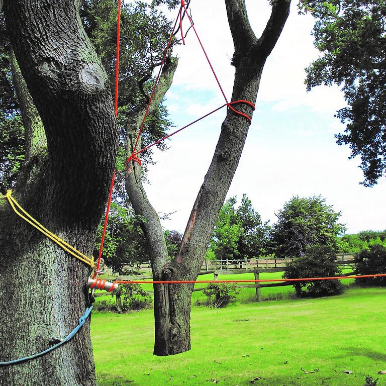 Rigging in Arboriculture (1)