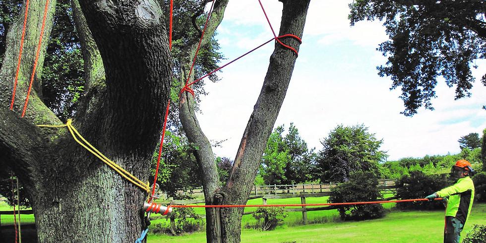 Rigging in Arboriculture