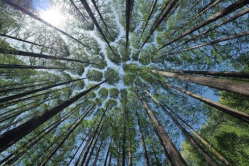 tree-4450514_640.jpg