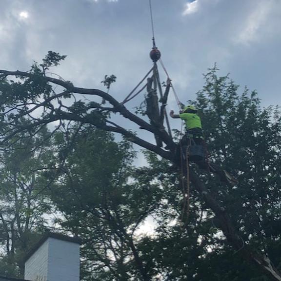 Understanding a Crane Training