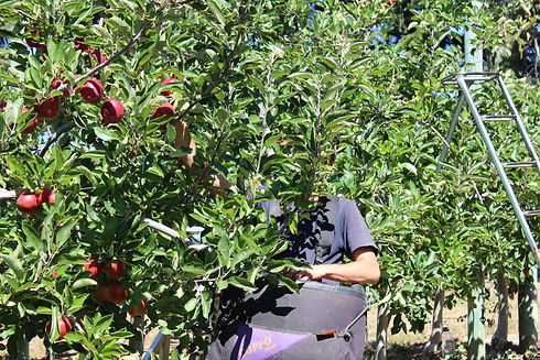 Orchard 03-14 308.JPG