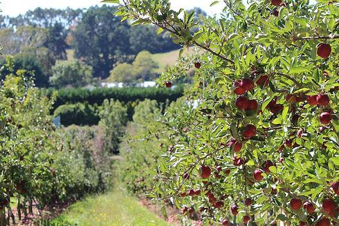 Orchard 03-14 324.JPG
