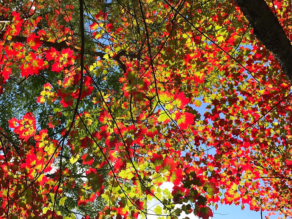 Fall foliage, North Conway, New Hampshire, Hiking, Mountain