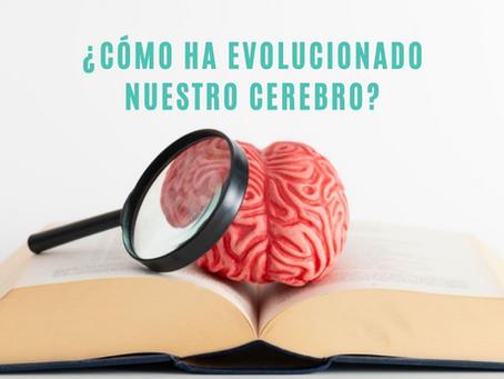 ¿Cómo ha evolucionado nuestro cerebro?