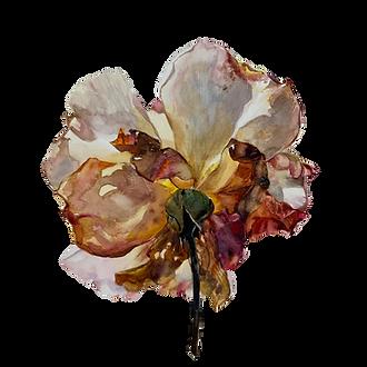 Jane's Rose.png