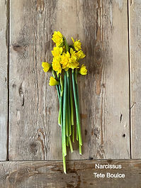 Tete Boucle Narcissus