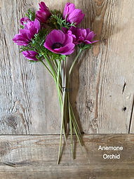 Anemone Orchid