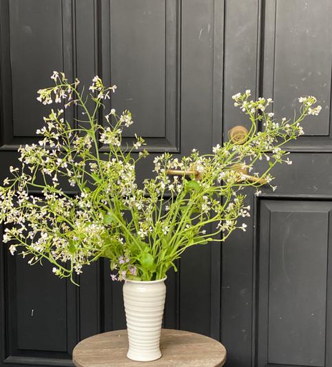 White Radish Blooms