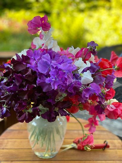 Sweet Peas Cut Flower Subscription (4 wks)