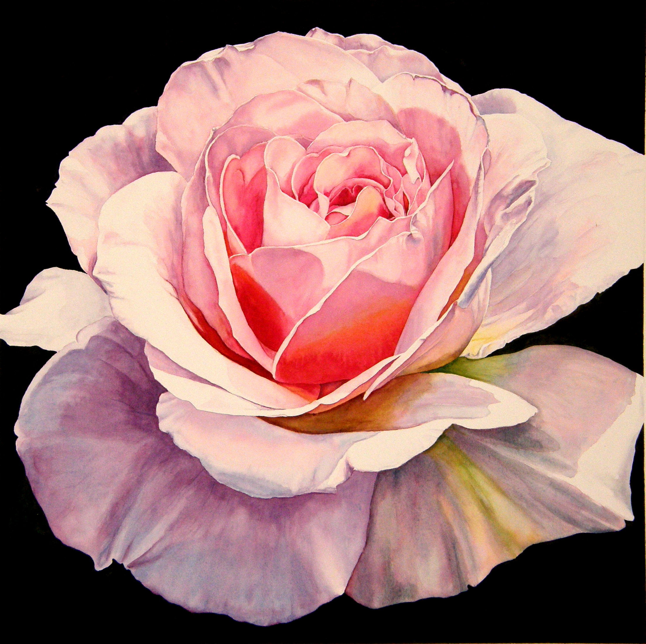 laurin McCracken 1 Rose - Romantica 20x20