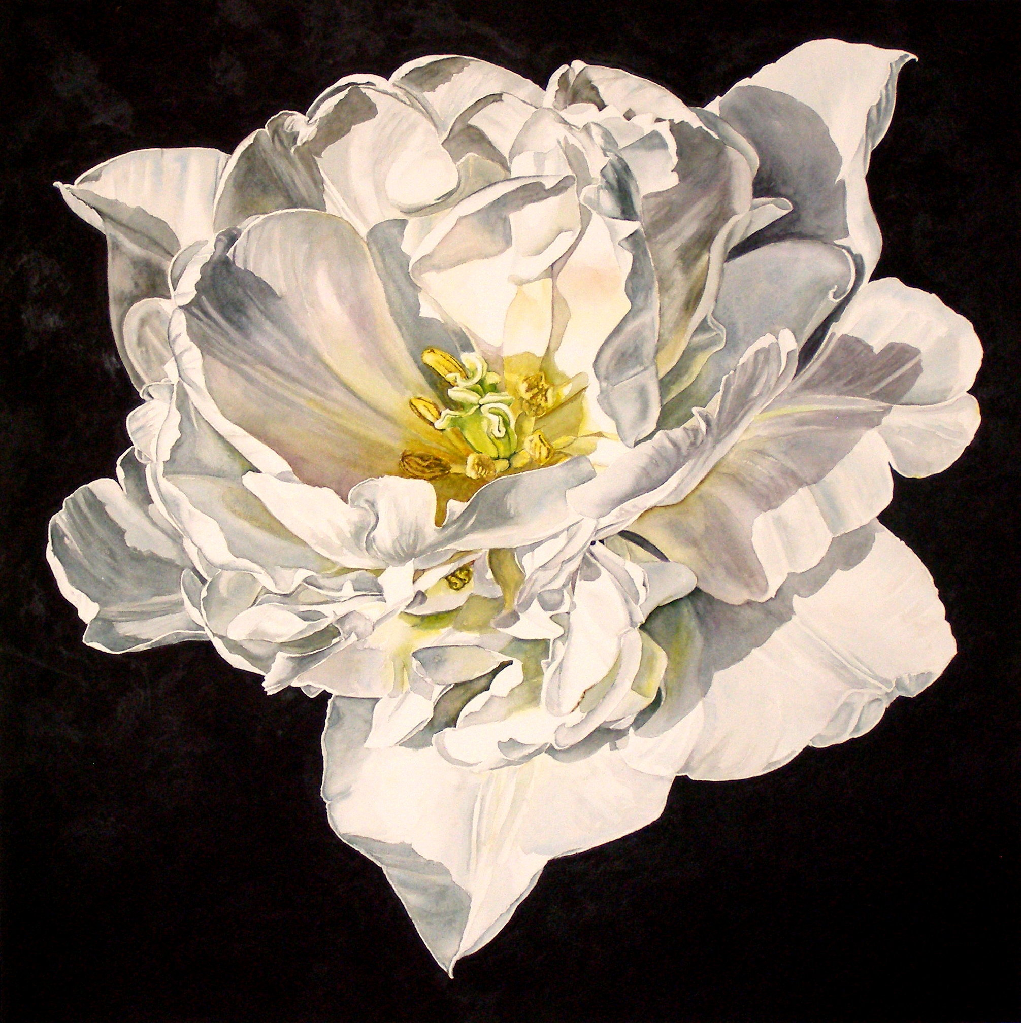 laurin McCracken 1 Tulip - Angelique 20x20