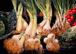 laurin McCracken Onions in the Market - Barcelona 18x26 c