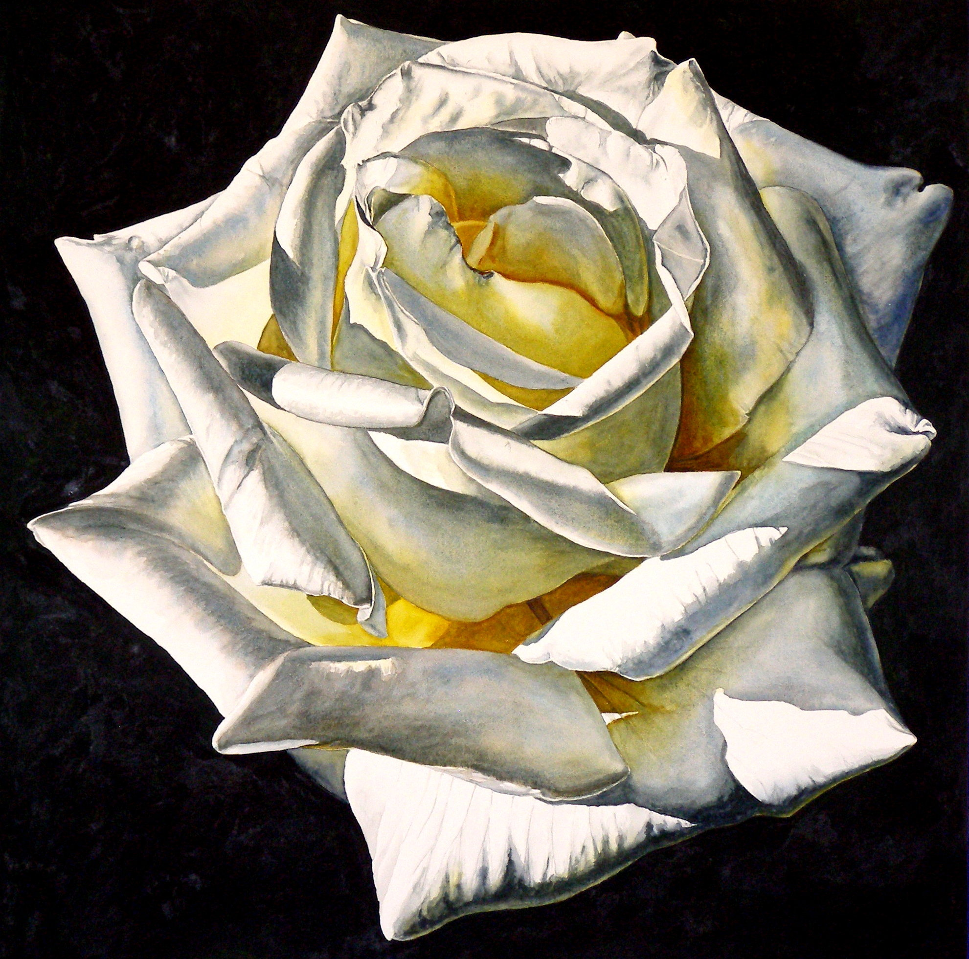 Laurin McCracken 1 White Rose- Yellow Center 20x20