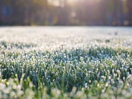 Quais são os impactos que os produtores rurais sofrem com a geada?