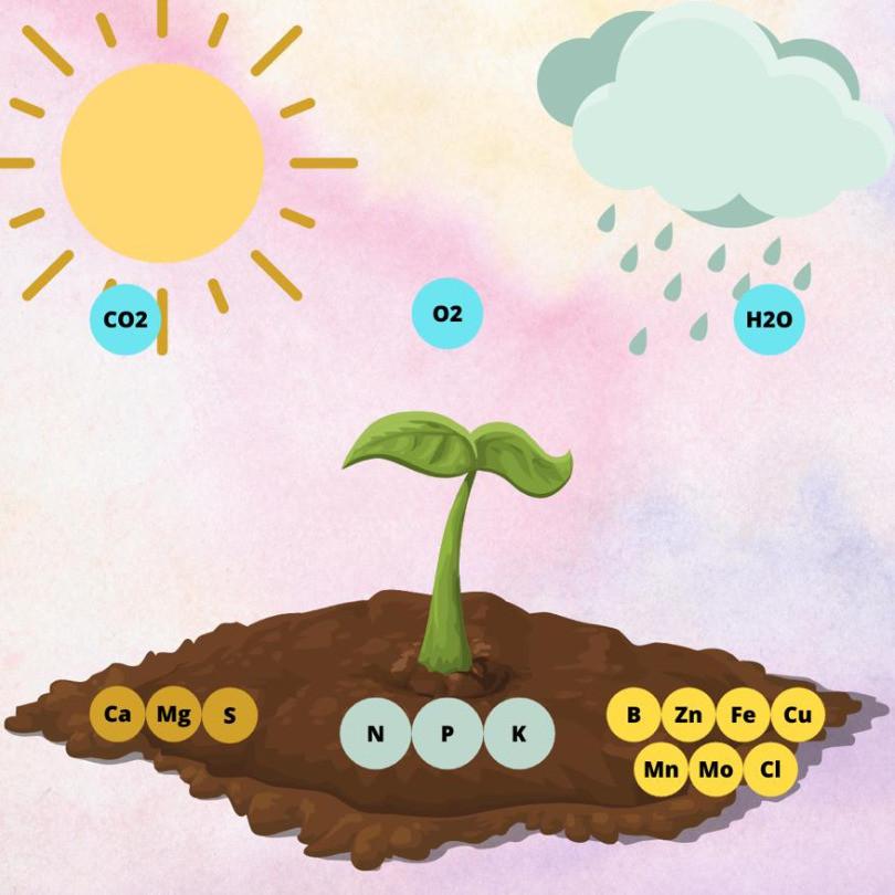 ilustração da obtenção nutrientes essenciais à nutrição vegetal