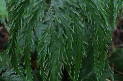 sendero guaual- uno de las variedades de helecho