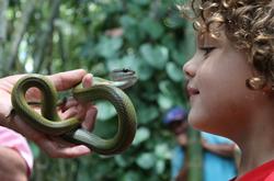 serpiente mirando fijamente a simon