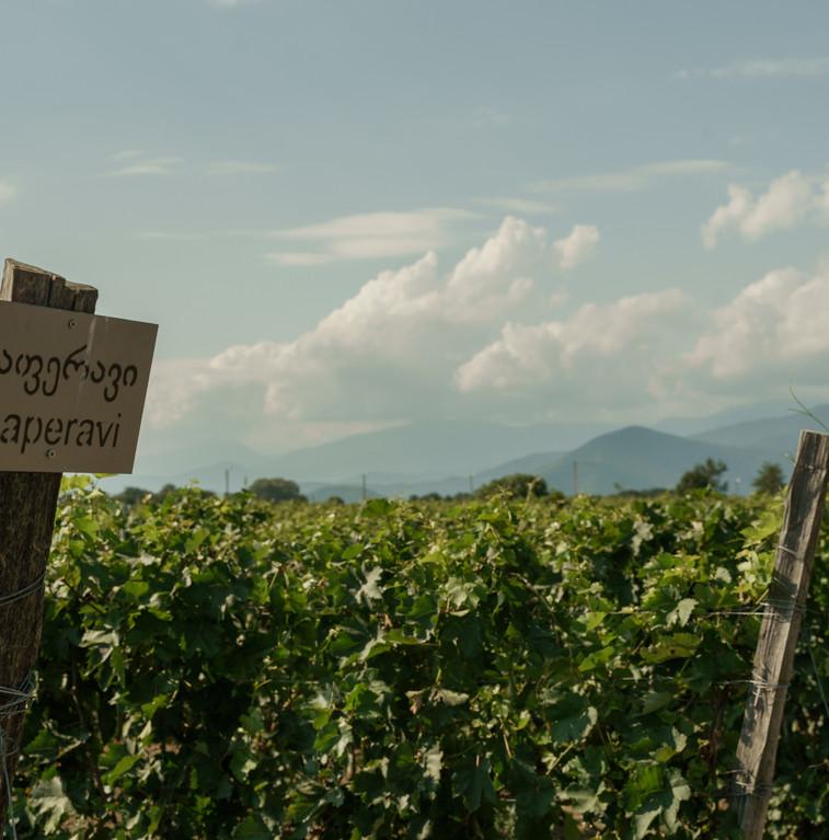 20200724-Askaneli-winery+vineyards-4-SWN