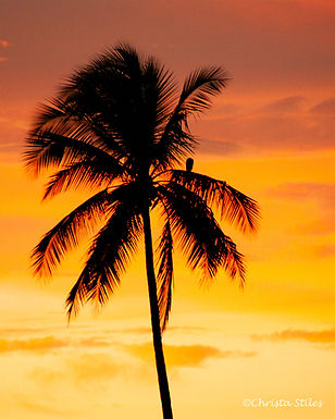 """""""Lone Palm"""" limited and numbered print, matted"""