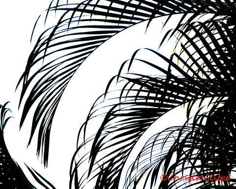 """""""Tropic Silhouette"""" limited and numbered print, matted"""