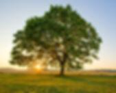 4319-ff7afa-Tree-0f9b4.jpg