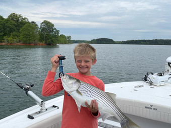 Lake Hartwell Fishing Report - April 29, 2021